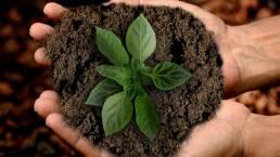 Як зробити ґрунт більш родючим ощадливо