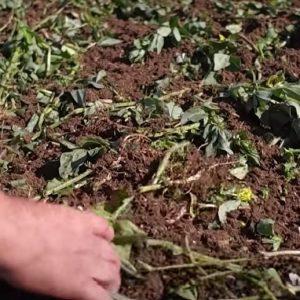 Ультраповерхнева обробка ґрунту